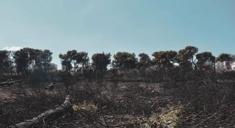 Διαδικασίες για την αναγέννηση της φύσης μετά την πυρκαγιά